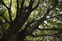 185. Place | Marathon | Harald D. (316) | Baum-Bäume