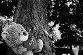 79. Platz | Marathon | Rudolf S. (34) | Baum-Bäume