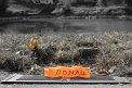 146. Place | Halbmarathon | Hunor E. (343) | am Donaukanal