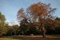 122. Platz | Marathon | Zoe B. (347) | Baum-Bäume