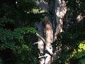 104. Place | Marathon | Barbara B. (360) | Baum-Bäume