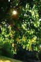 116. Place | Marathon | Philipp W. (384) | Baum-Bäume