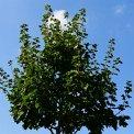 33. Place | Marathon | Gerd K. (4) | Baum-Bäume