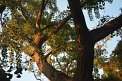179. Place | Marathon | Stephanie K. (41) | Baum-Bäume