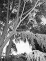 88. Platz | Marathon | Bianca M. (419) | Baum-Bäume