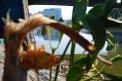 86. Platz | Jugendbewerb | Afra S. (424) | am Donaukanal