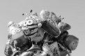 Tortugas y pulpinhos (435) - ∅ 4.67