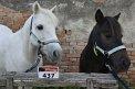 crazy horses (437) - ∅ 0.00