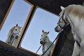 crazy horses (437) - ∅ 7.00