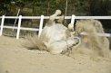 1. Platz | Halbmarathon | crazy horses (437) | am Boden