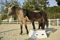 1. Platz - crazy horses (437)