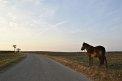 1. Platz | Halbmarathon | crazy horses (437) | Weitblick