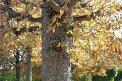 104. Platz | Marathon | Saeed B. (455) | Baum-Bäume