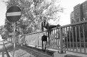 48. Place | Marathon | Ariadni M. (458) | Abenteuer Stadt