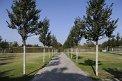 100. Platz | Marathon | Walter K. (459) | Baum-Bäume