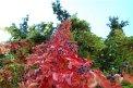 190. Place | Marathon | Angel (49) | Baum-Bäume