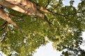 141. Place | Marathon | Angelika P. (495) | Baum-Bäume
