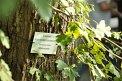 182. Place | Marathon | Caroline A. (514) | Baum-Bäume
