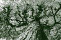 79. Platz | Marathon | Sister Act (543) | Baum-Bäume