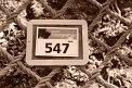 93. Place - Nadja Enöckl (547)