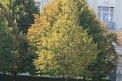 141. Platz | Marathon | Ursula Haberler (555) | Baum-Bäume