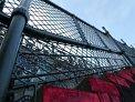 447. Platz | Halbmarathon | Cosima L. (565) | Stiegen-Stufen-Treppen
