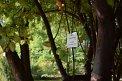 104. Place | Marathon | Claudio L. (575) | Baum-Bäume