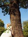 29. Place | Marathon | Wunsch-Team (60) | Baum-Bäume