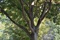 84. Place | Marathon | Conair26 (620) | Baum-Bäume