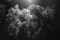 34. Place | Marathon | KaXa (622) | Baum-Bäume