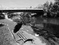 146. Place | Halbmarathon | Henri S. (647) | am Donaukanal