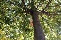 194. Place | Marathon | Carolin N. (648) | Baum-Bäume