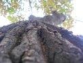 174. Place | Marathon | Stefanie G. (649) | Baum-Bäume