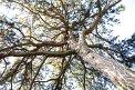 100. Place | Marathon | Abigaile H. (650) | Baum-Bäume