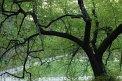 43. Place | Marathon | Peter (674) | Baum-Bäume