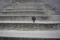 76. Platz | Marathon | afotorino (717) | Stiegen-Stufen-Treppen