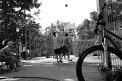 210. Platz | Halbmarathon | Martin W. (792) | Abenteuer Stadt