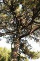 170. Platz | Marathon | Clemens P. (90) | Baum-Bäume