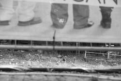 239. Place | Einzel | Pippa A. (1031) | down through