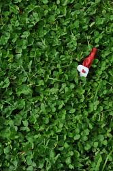 253. Place | Einzel | Susanne Escalante (299) | Adventure in the Green