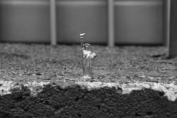 164. Place | Einzel | Simone D. (358) | huge-tiny