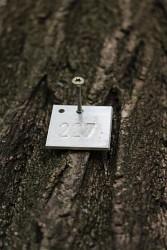 253. Place | Einzel | Elisabeth G. (524) | marked