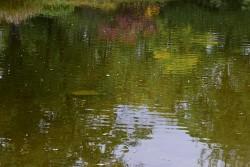 164. Place | Einzel | Hans Peter G. (527) | Adventure in the Green