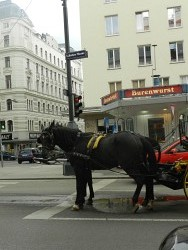 179. Platz | Einzel | LeNeapolitane (584) | Essen in Wien