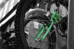 272. Place | Einzel | Ocelot (72) | Adventure in the Green