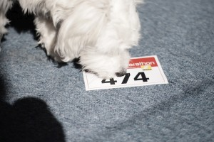 69. Platz - Team Eisbär (474)