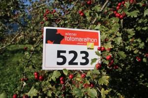 246. Platz - Katharina S. (523)