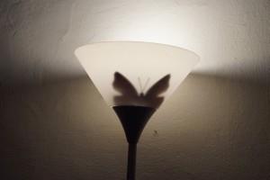 96. Place | Kreativ | A & M Ennagi (57) | light and shadow
