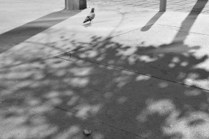 277. Place | Einzel | Thomas (593) | light and shadow