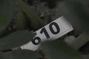 269. Platz - Werner K. (610)